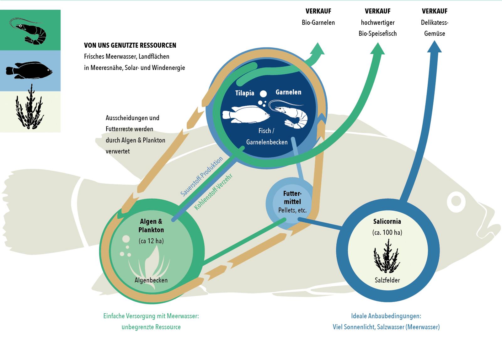 Das System der ProTerraMaroc Aquakulturen