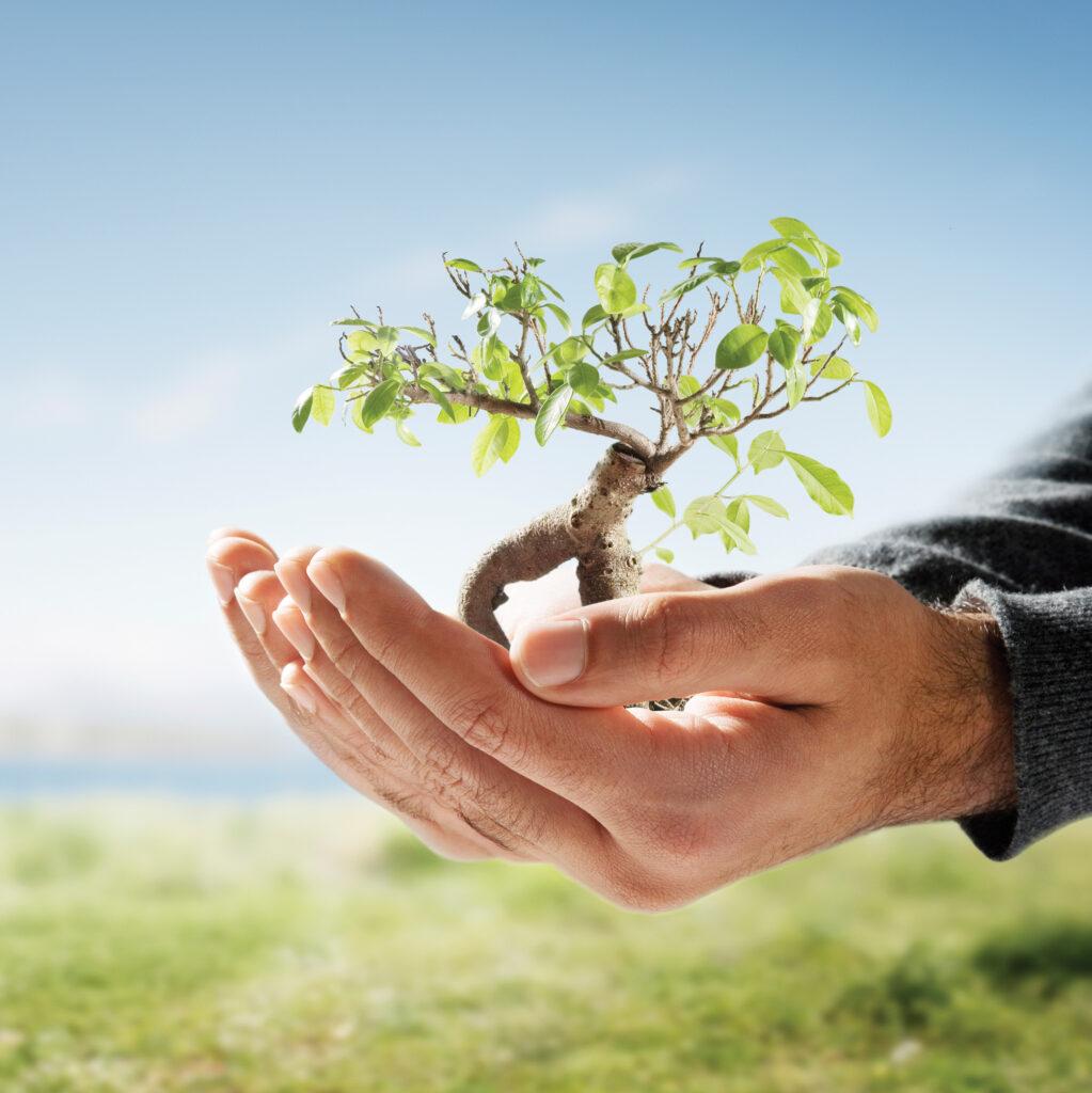 Nachhaltigkeit, Verantwortung und Erfolg.