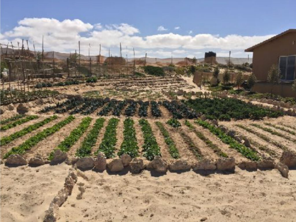 Gemüse Garten