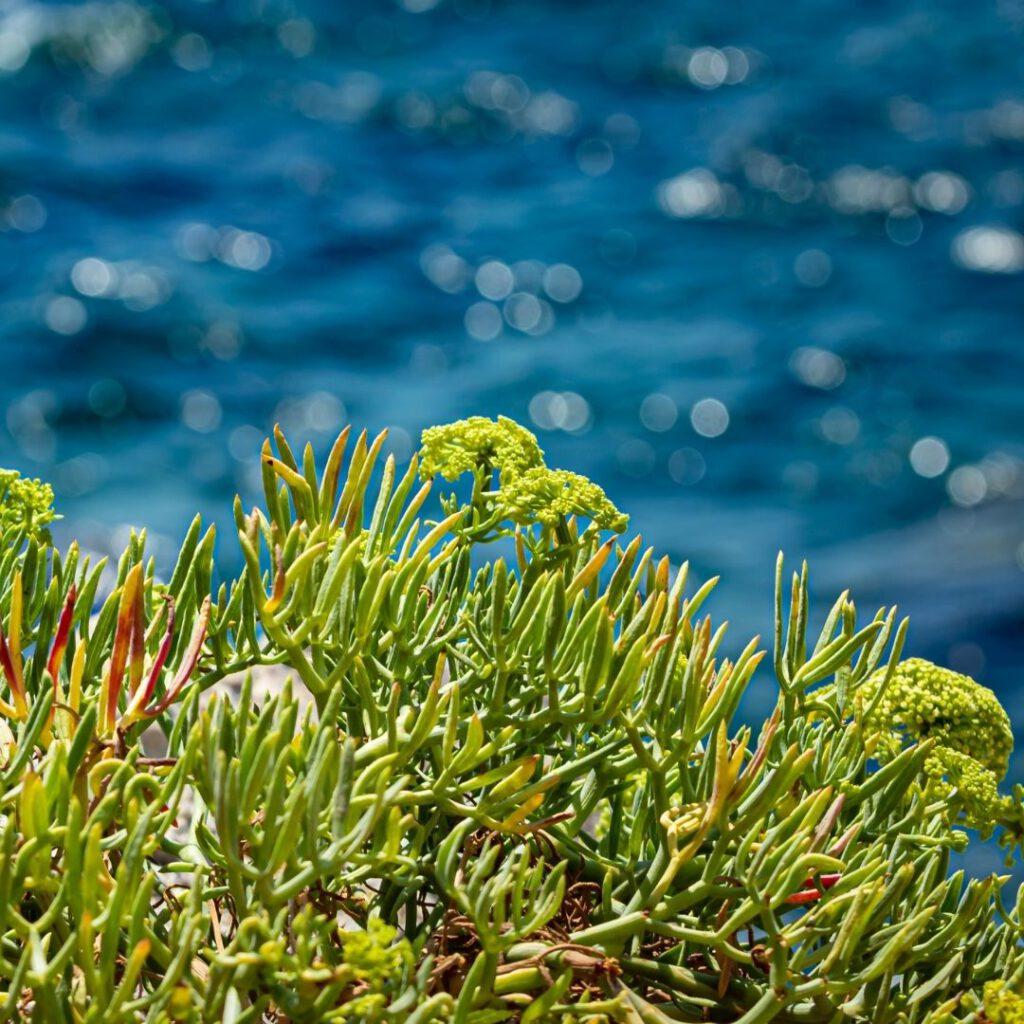 Pflanzen am Wasser